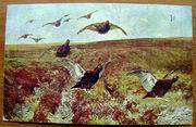 Редкая открытка Охота. Шотландские граусы 1900 год.